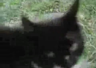 Two cats fucking in the grass, enjoy