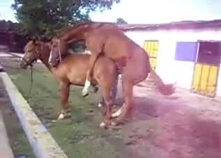 Small pony fucked his young girlfriend from behind